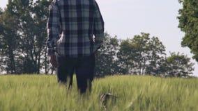 Мужская прогулка с щенком на поле видеоматериал