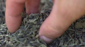 Мужская рука комплектует листья чая для заваривать Китайский зеленый чай Высушенный чай выходит предпосылка o Красивый высушенный акции видеоматериалы