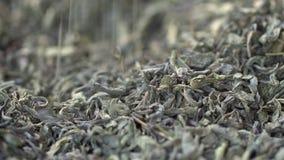 Мужская рука комплектует листья чая для заваривать Китайский зеленый чай Высушенный чай выходит предпосылка o Красивый высушенный видеоматериал