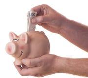 Мужская рука падая 100 SEK в копилку Стоковое Изображение