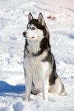 Мужская шелуха outdoors в снежном лесе Стоковое фото RF