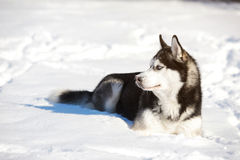 Мужская шелуха outdoors в снежном лесе Стоковое Изображение