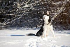 Мужская шелуха outdoors в снежном лесе Стоковые Фото