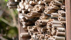 Мужские одичалые пчелы летая в весеннее время на укрытии насекомого искать для женских пчел акции видеоматериалы