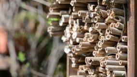 Мужские одичалые пчелы летая в весеннее время на укрытии насекомого искать для женских пчел сток-видео