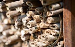 Мужские одичалые пчелы летая перед укрытием насекомого Стоковое Изображение RF