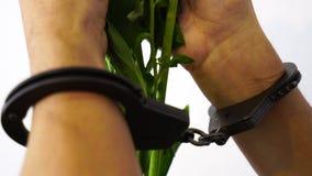 Мужские руки в наручниках держа цветки, влюбленность злодеяние, запрещенная красота, ограничиваемая нежность, свобода слова, врем сток-видео
