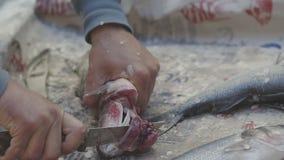 Мужские руки опустошая рыбу акции видеоматериалы
