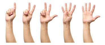 Мужские руки подсчитывая от изолированные одно к 5 Стоковые Изображения RF