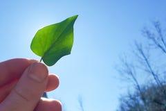 Мужское повышение руки зеленые лист в небо стоковые фото