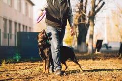 Мужское cynologist, тренировка полицейской собаки внешняя Стоковое Изображение