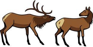 Мужской и женский лось иллюстрация вектора