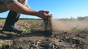 Мужской фермер вручает владениям пригорошня почвы и лить его назад через его пальцы на поле Рассматривать молодого человека сухой видеоматериал