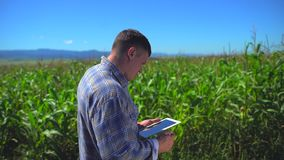 Мужской человек фермера используя цифровой планшет, технологию в кукурузном поле, проверяя качество заводов органической мозоли видеоматериал