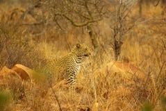 Южные африканские животные Стоковое Фото