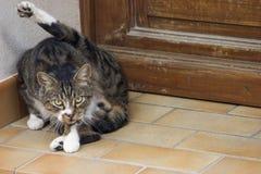 мужчина кота Стоковое Изображение