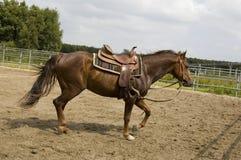 мужчина лошади Стоковое Изображение