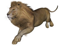 мужчина льва Стоковая Фотография