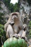 Мужчина макаки на пещерах Batu Стоковые Фотографии RF