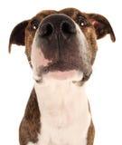 мужчина собаки Стоковое Фото