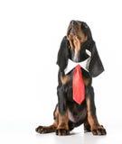мужчина собаки Стоковое Изображение