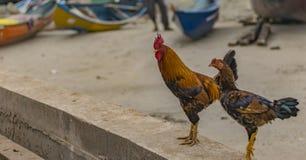 Мужчина цыплят и женское - близкий вверх с предпосылкой пляжа стоковые фотографии rf