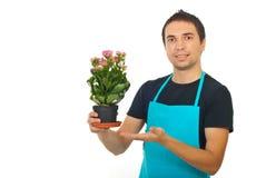мужчина kalanchoe цветка florist показывая к Стоковая Фотография RF