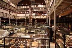 музей антропологии стоковые фотографии rf