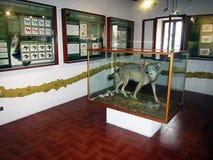 Музей волка Стоковое Изображение RF
