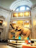 Музей в dc Вашингтона Стоковое Изображение RF