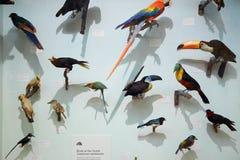 Музей естественной истории заполнил юг - американские птиц Стоковые Фото