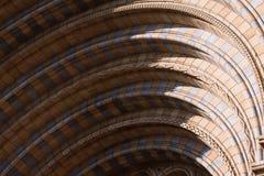 музей истории естественный Стоковое Изображение RF