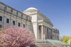 Музей и вишневые деревья Бруклина Стоковая Фотография
