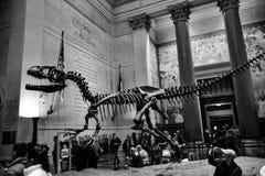 Музей Нью-Йорка Стоковое Изображение
