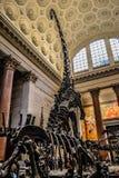 Музей NYC Стоковые Фотографии RF
