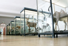 Музей Senckenberg Стоковые Фото