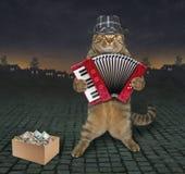 Музыкант кота на улице стоковые фотографии rf