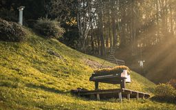 Музыка в природе стоковая фотография