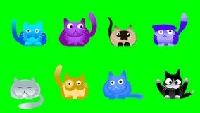 Музыкальные коты на зеленом экране Стоковое Изображение