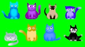 Музыкальные коты на зеленом экране Стоковая Фотография