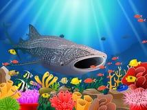 Мультфильм китовой акулы с подводным взглядом стоковые фото