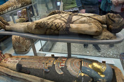 Мумии в великобританском музее Стоковые Фотографии RF