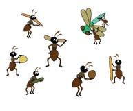 муравеев Стоковые Фотографии RF