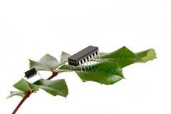 муравеи электронные стоковая фотография