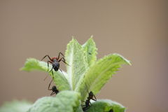 муравеи Стоковые Фотографии RF