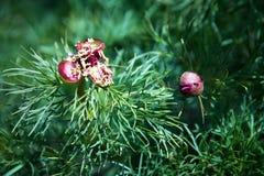 Муравей бабушки идя на цветок Стоковые Изображения RF