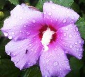 Муравей в дожде Стоковые Изображения RF