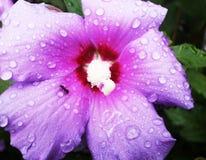 Муравей в дожде Стоковое Изображение