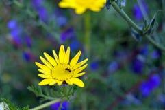 Муравей и цветок Стоковая Фотография