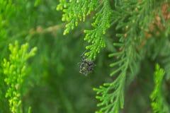 Муравей на ветви Стоковая Фотография